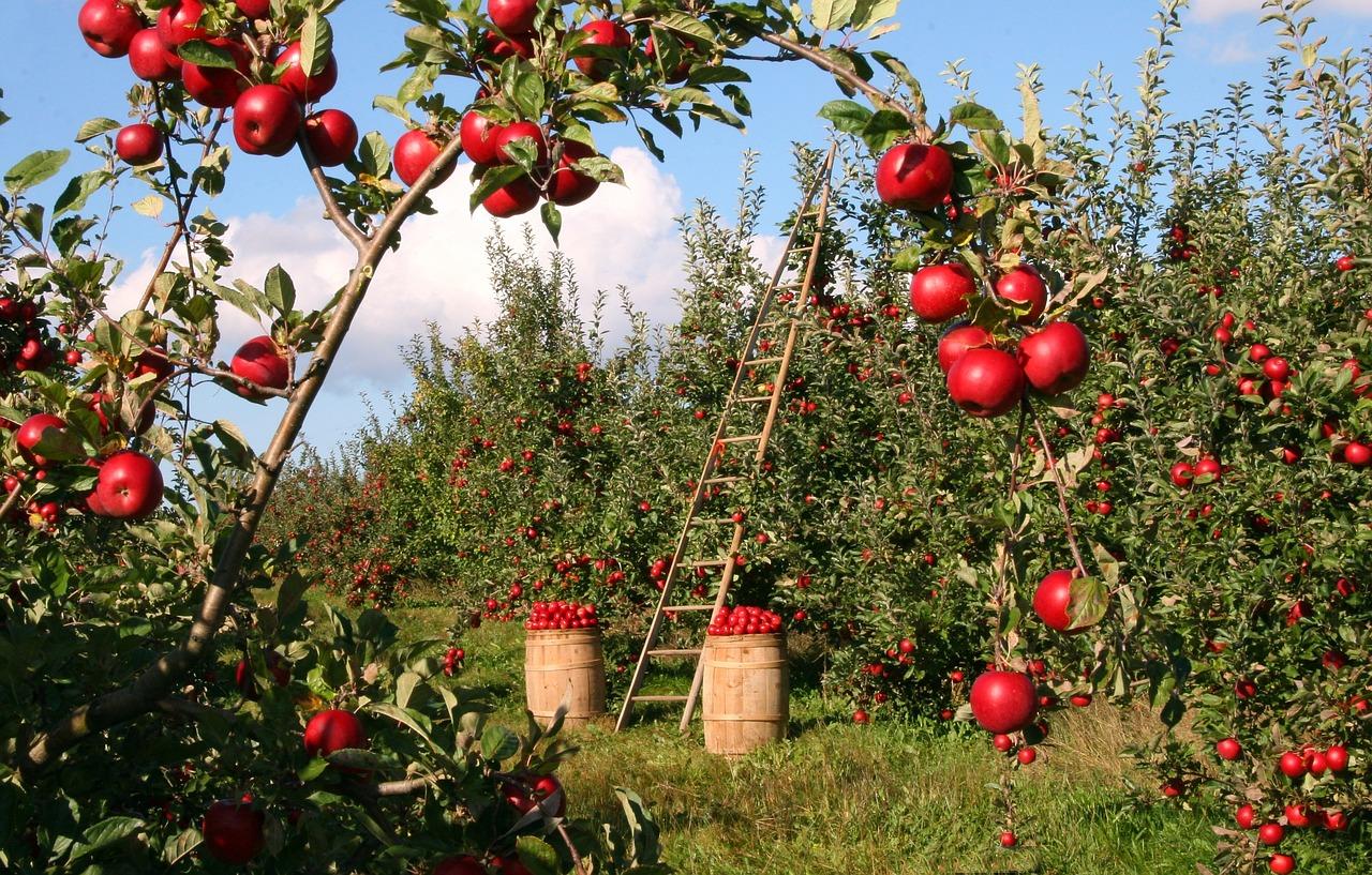 Publicadas las ayudas para jóvenes agricultores